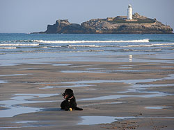 Dog sitting Cornwall, Effy playing ball on the beach at Godrevy