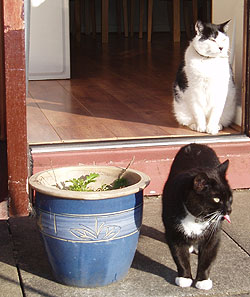 Cat Pop in Liverpool, Molly & Ziggy wandering in the garden during Caths visit