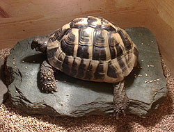 Pet pop in Liverpool, Fred the tortoise visited twice a day while his owners had sunny holiday