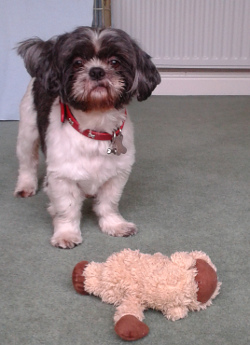 Billy stayed from 1st to 10th January. He was a Shih Tzu.